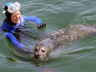In Warnemünde kann man mit Seehunden schwimmen gehen   Reise