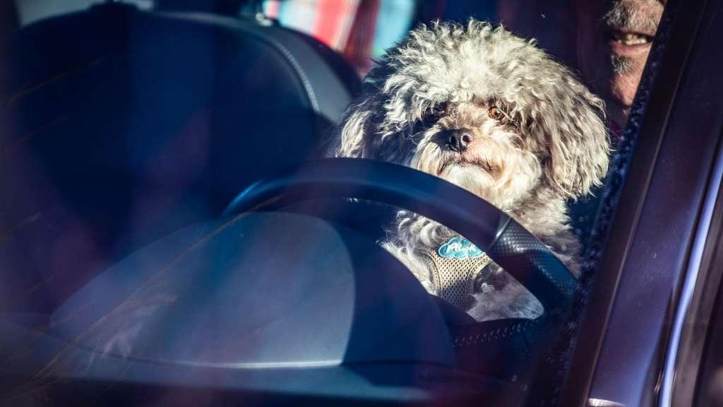Hund Im Auto Scheibe Einschlagen